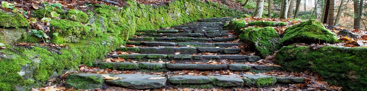 Stairs at Fillmore Glen State Park Fall INT by Tourism Office