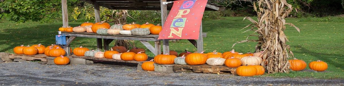 Farm Stand Pumpkins Fall on Route 34 INT by Tourism Office